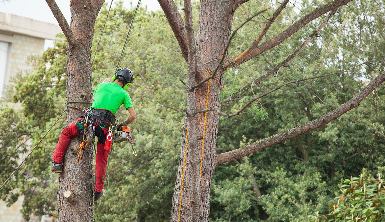 abattage d'arbres sur Villedieu-les-Poêles | Le Jardin de Gwendoleen
